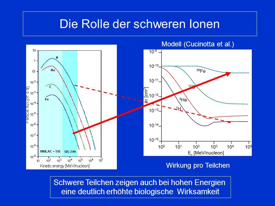 Wirkung pro Teilchen Die Rolle der schweren Ionen Schwere Teilchen zeigen auch bei hohen Energien eine deutlich erhöhte biologische Wirksamkeit Modell (Cucinotta et al.)