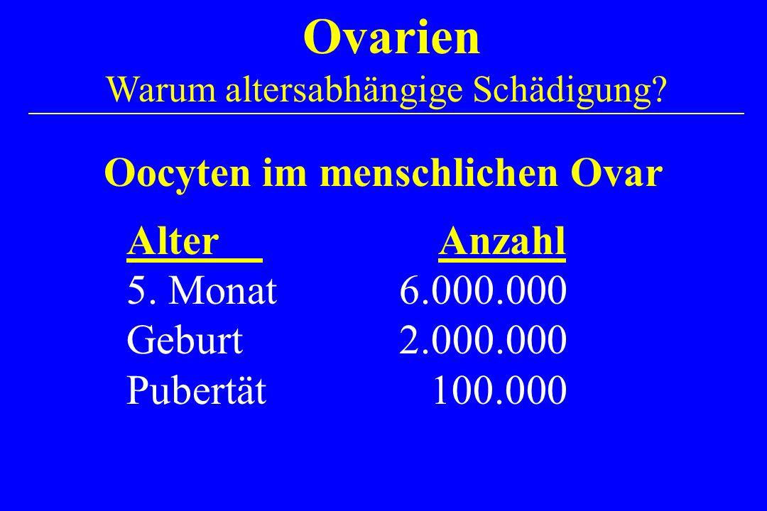 Alter Anzahl 5. Monat6.000.000 Geburt2.000.000 Pubertät 100.000 Ovarien Warum altersabhängige Schädigung? Oocyten im menschlichen Ovar