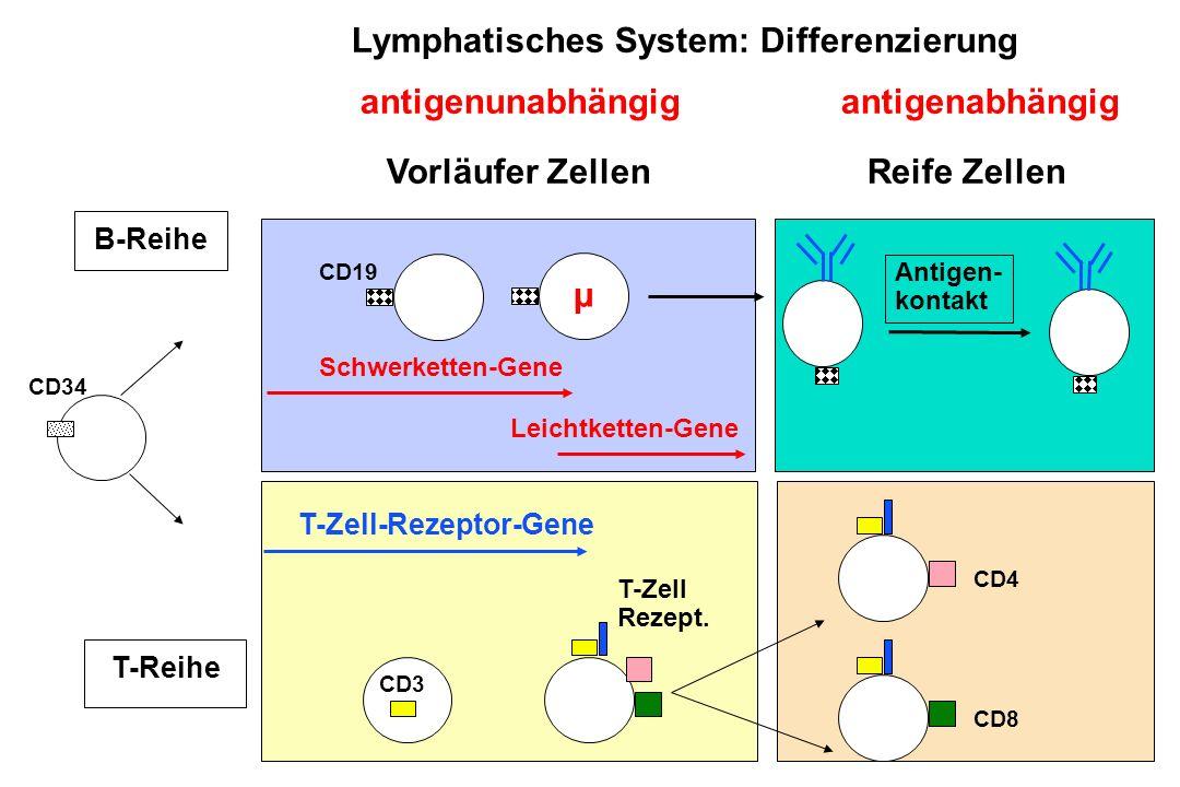 A.Reiter Juni 2004 CD19 CD34 µ T-Reihe T-Zell Rezept.