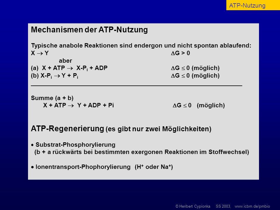 © Heribert Cypionka SS 2003, www.icbm.de/pmbio Mechanismen der ATP-Nutzung Typische anabole Reaktionen sind endergon und nicht spontan ablaufend: X Y