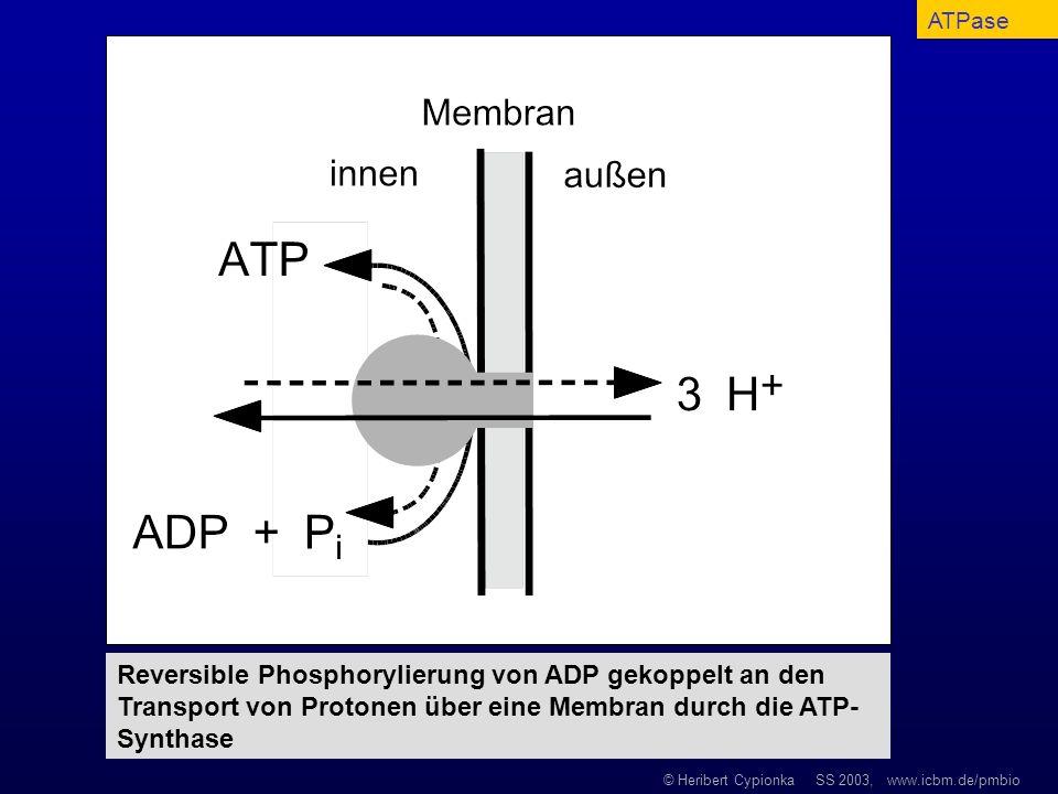 © Heribert Cypionka SS 2003, www.icbm.de/pmbio Reversible Phosphorylierung von ADP gekoppelt an den Transport von Protonen über eine Membran durch die