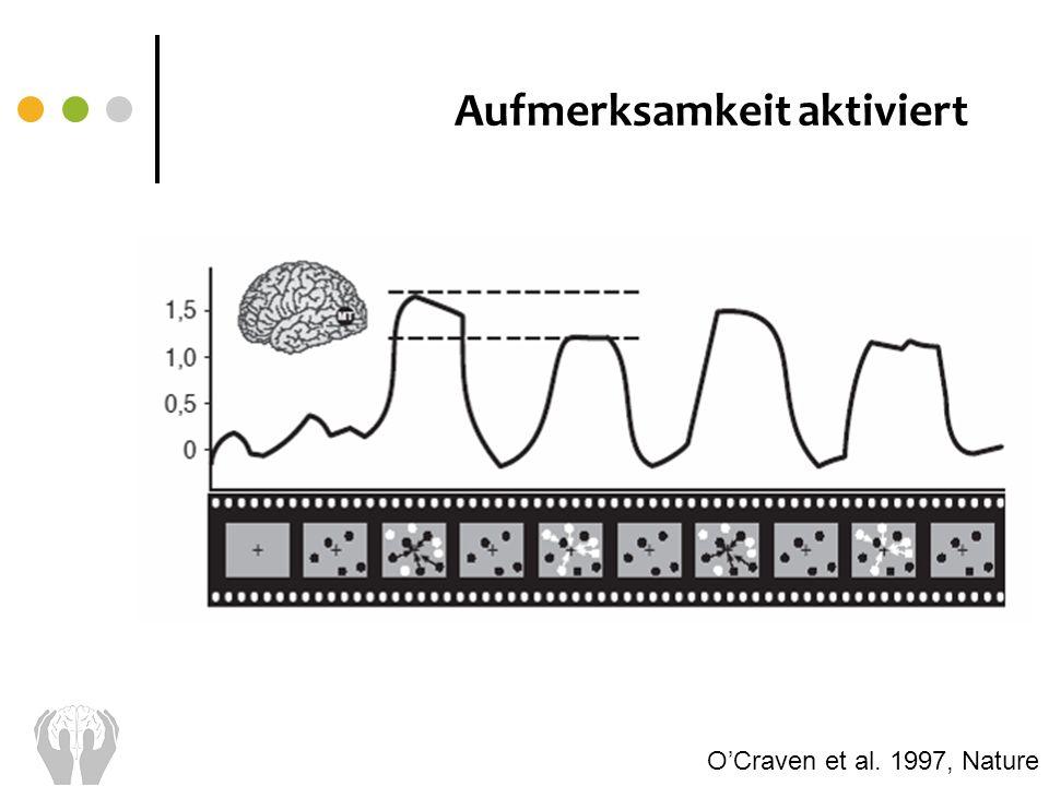 Aufmerksamkeit aktiviert OCraven et al. 1997, Nature