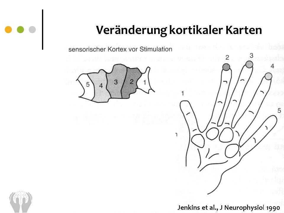 Jenkins et al., J Neurophysiol 1990 Veränderung kortikaler Karten