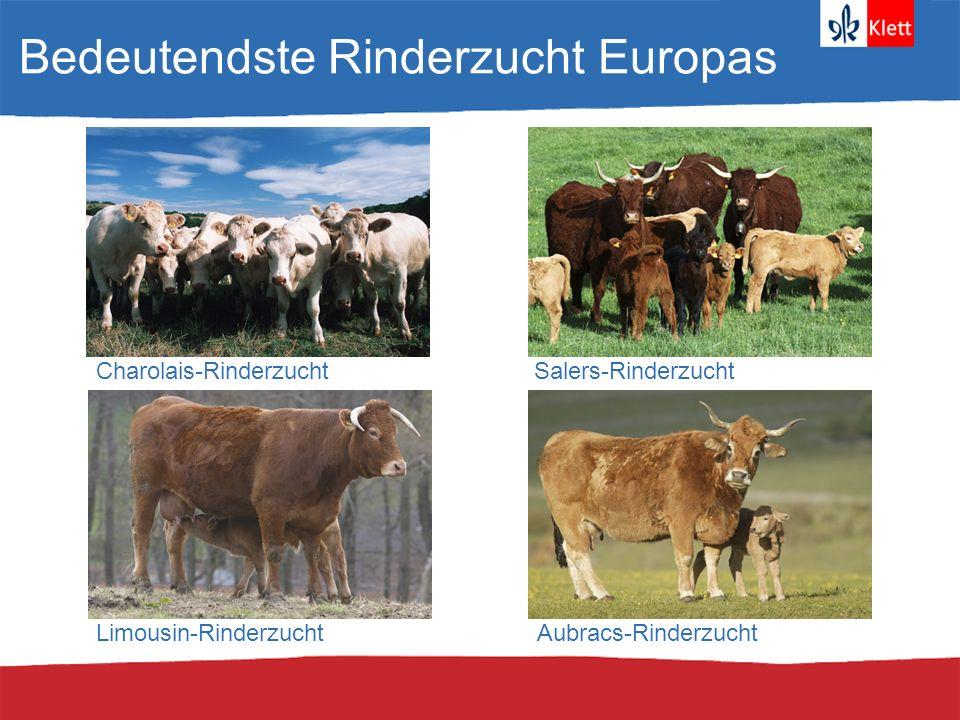 Bedeutendste Rinderzucht Europas Charolais-RinderzuchtSalers-Rinderzucht Limousin-RinderzuchtAubracs-Rinderzucht