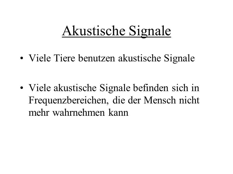 Akustische Signale Viele Tiere benutzen akustische Signale Viele akustische Signale befinden sich in Frequenzbereichen, die der Mensch nicht mehr wahr
