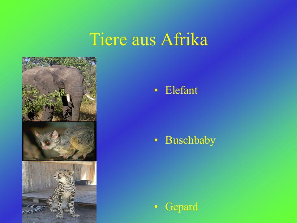Viele Afrikaner sind Christen.