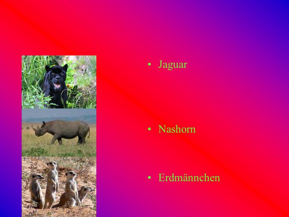 Tiere aus Afrika Elefant Buschbaby Gepard