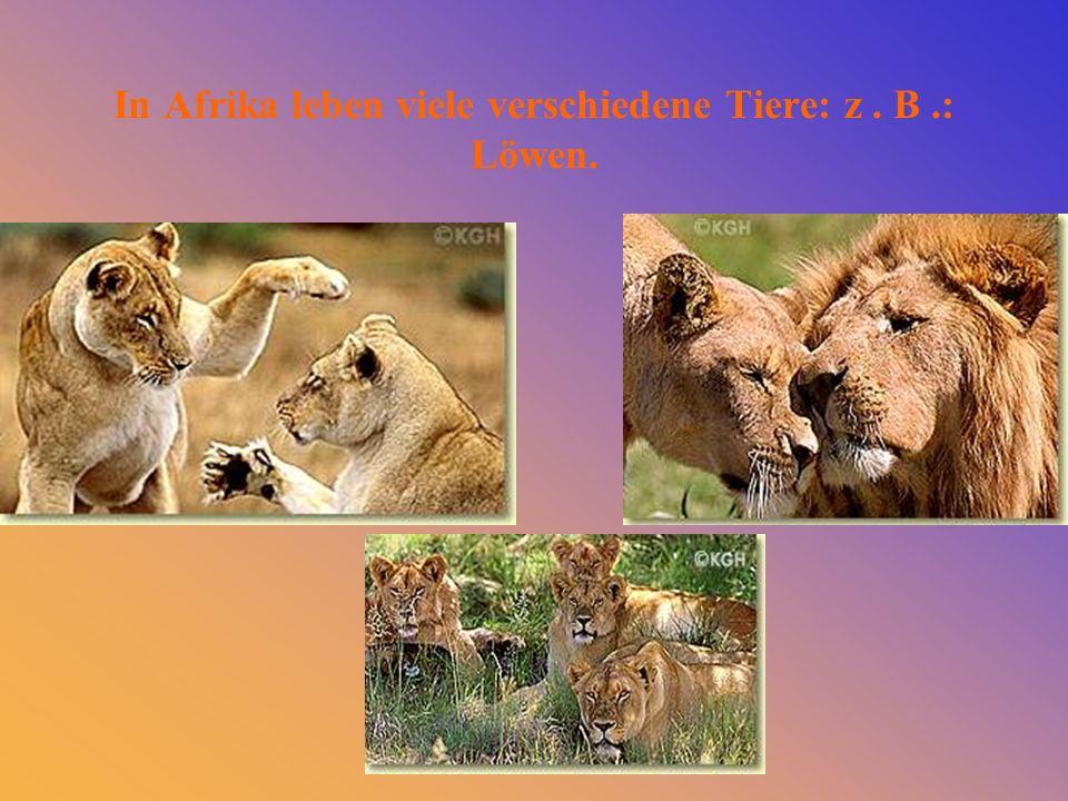 Leopard Luchsbabys Tiger