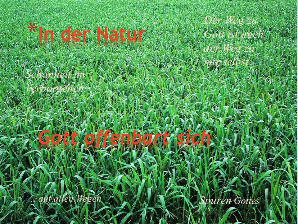 Spuren Gottes Schönheit im Verborgenen Der Weg zu Gott ist auch der Weg zu mir selbst … auf allen Wegen