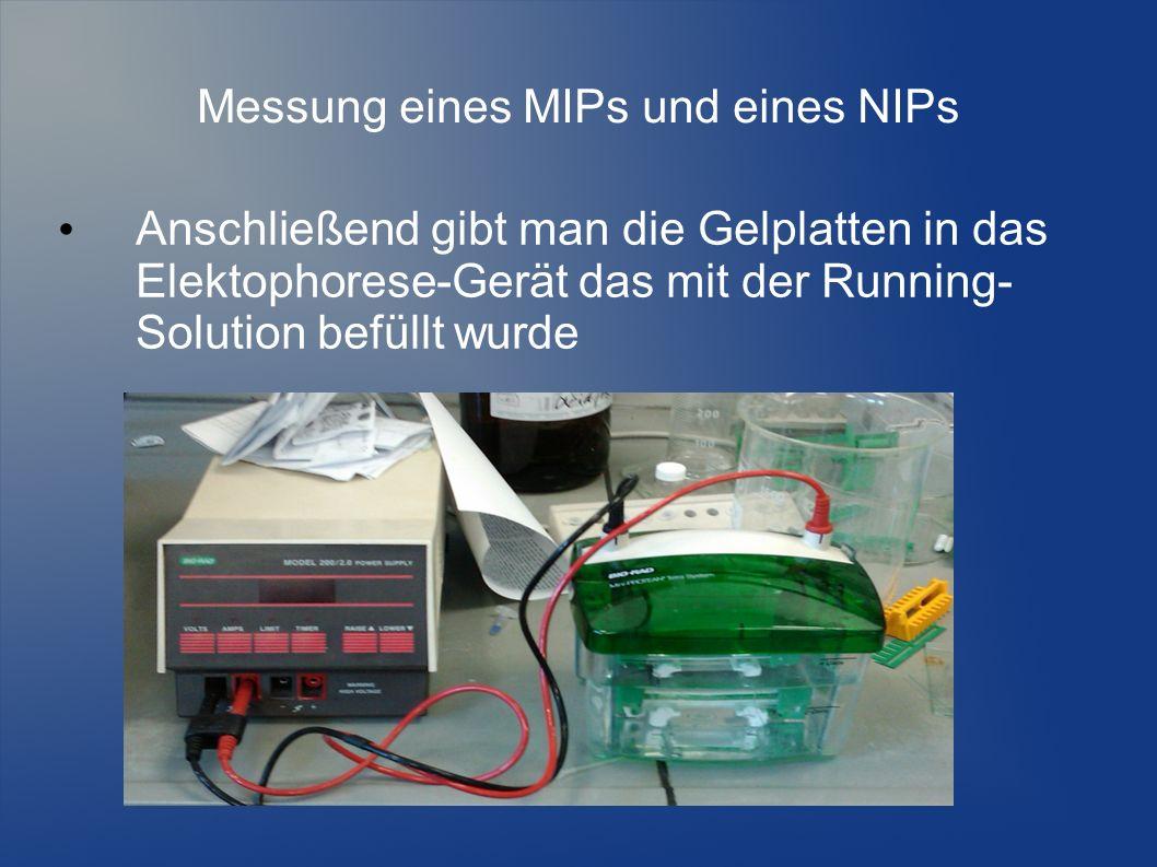 Messung eines MIPs und eines NIPs Anschließend gibt man die Gelplatten in das Elektophorese-Gerät das mit der Running- Solution befüllt wurde