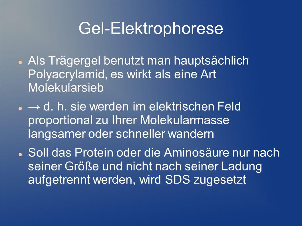 Gel-Elektrophorese Als Trägergel benutzt man hauptsächlich Polyacrylamid, es wirkt als eine Art Molekularsieb d. h. sie werden im elektrischen Feld pr