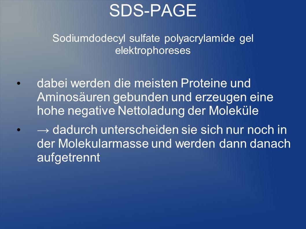 SDS-PAGE Sodiumdodecyl sulfate polyacrylamide gel elektrophoreses dabei werden die meisten Proteine und Aminosäuren gebunden und erzeugen eine hohe ne