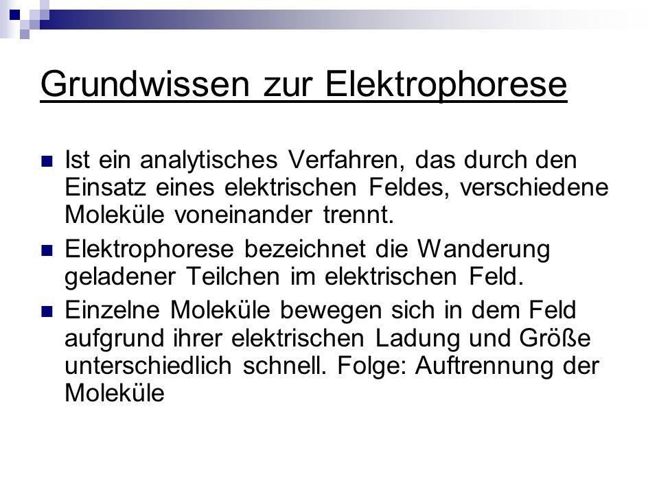 Grundwissen zur Elektrophorese Ist ein analytisches Verfahren, das durch den Einsatz eines elektrischen Feldes, verschiedene Moleküle voneinander tren