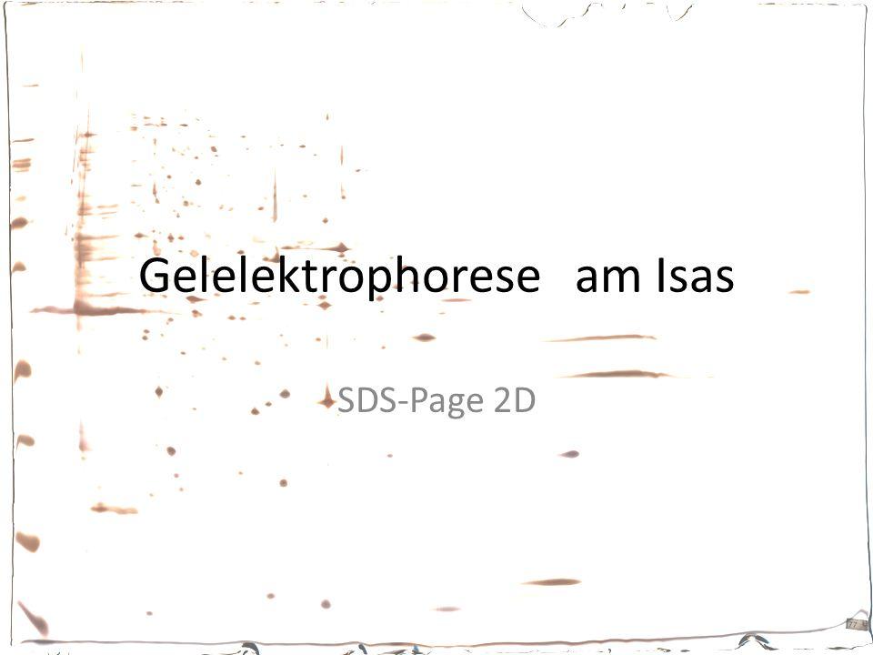 Gelelektrophoreseam Isas SDS-Page 2D