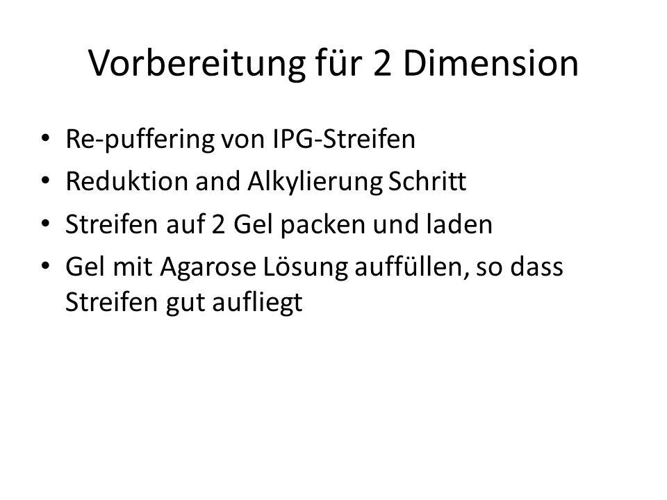 Vorbereitung für 2 Dimension Re-puffering von IPG-Streifen Reduktion and Alkylierung Schritt Streifen auf 2 Gel packen und laden Gel mit Agarose Lösun