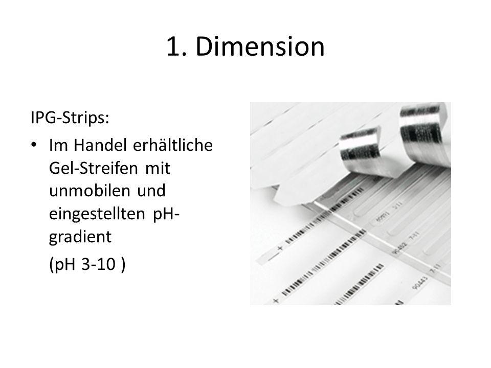 1. Dimension IPG-Strips: Im Handel erhältliche Gel-Streifen mit unmobilen und eingestellten pH- gradient (pH 3-10 )