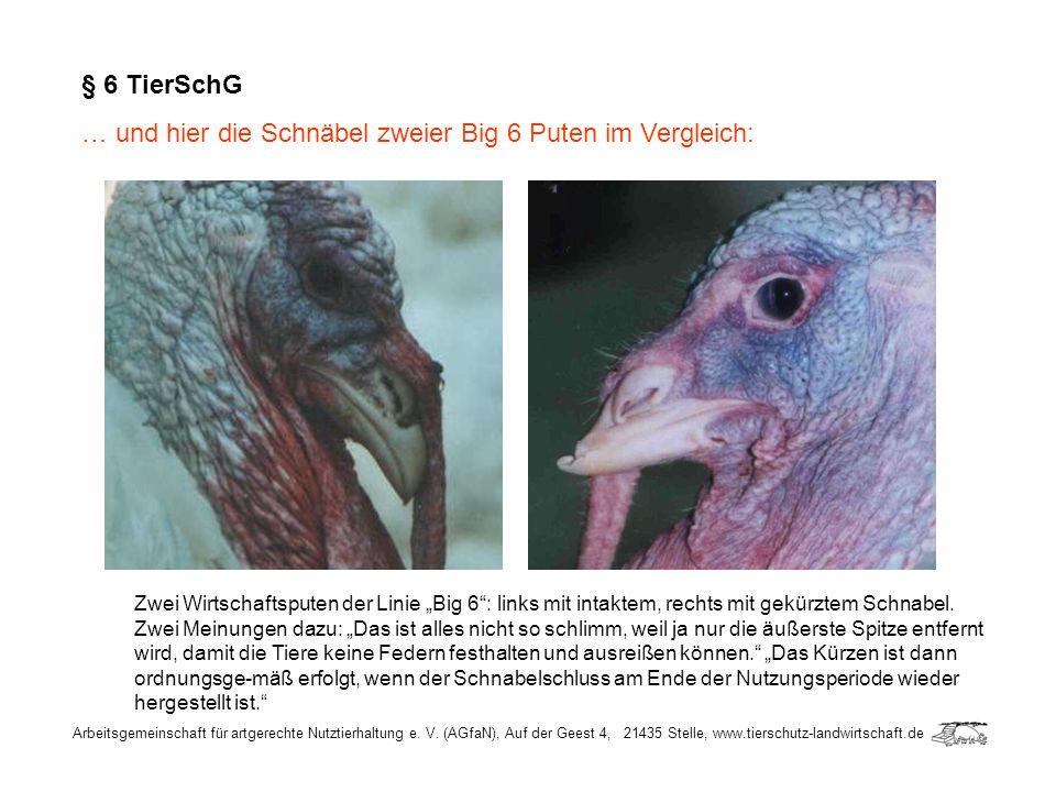 Arbeitsgemeinschaft für artgerechte Nutztierhaltung e. V. (AGfaN), Auf der Geest 4, 21435 Stelle, www.tierschutz-landwirtschaft.de § 6 TierSchG … und