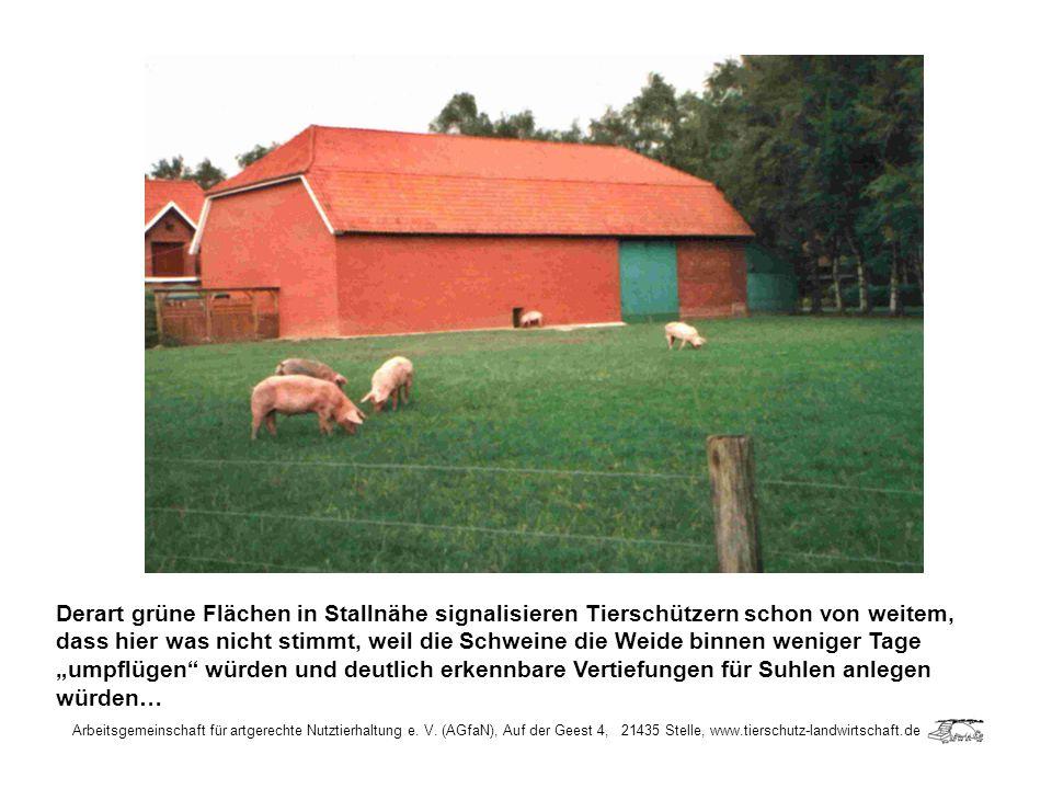 Arbeitsgemeinschaft für artgerechte Nutztierhaltung e. V. (AGfaN), Auf der Geest 4, 21435 Stelle, www.tierschutz-landwirtschaft.de Derart grüne Fläche