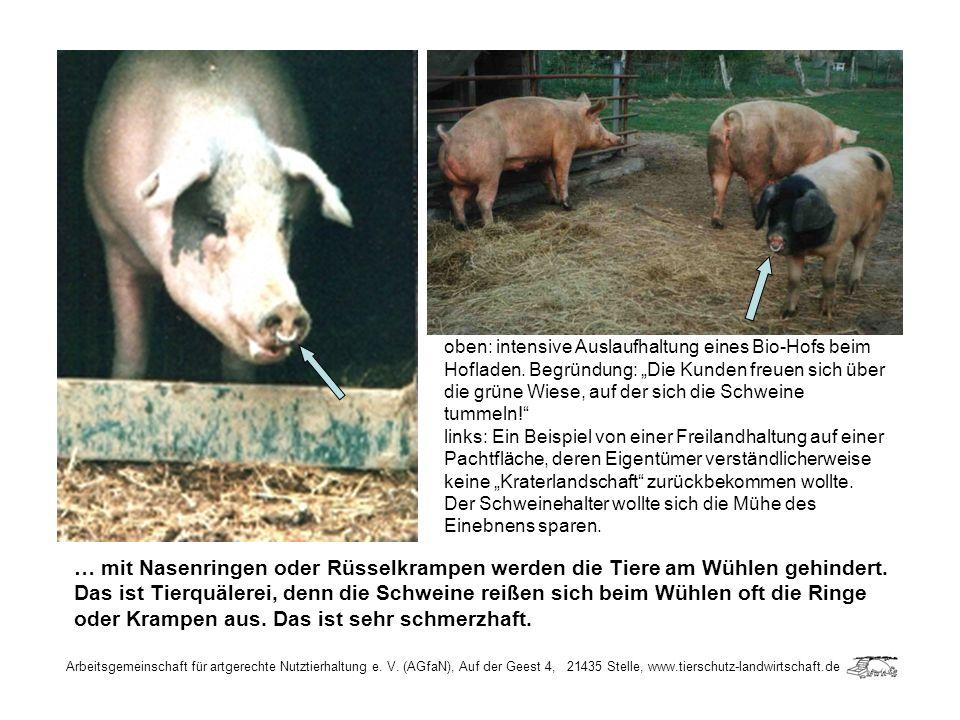 Arbeitsgemeinschaft für artgerechte Nutztierhaltung e. V. (AGfaN), Auf der Geest 4, 21435 Stelle, www.tierschutz-landwirtschaft.de … mit Nasenringen o