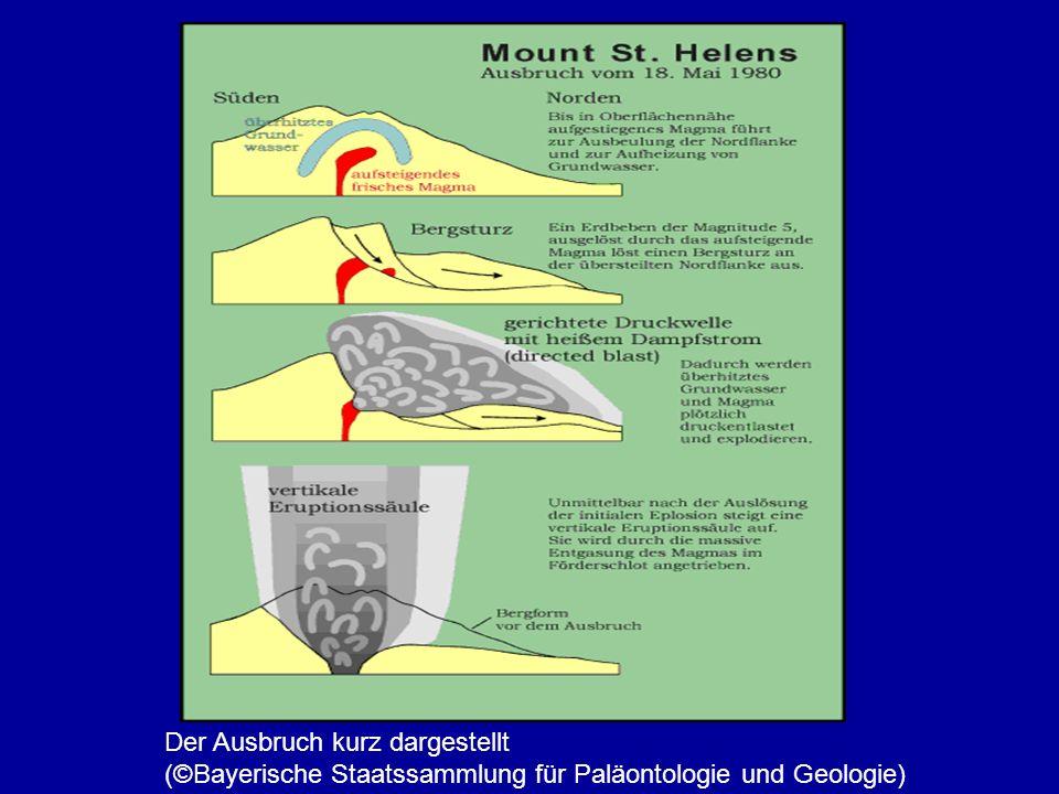 Der Ausbruch kurz dargestellt (©Bayerische Staatssammlung für Paläontologie und Geologie)
