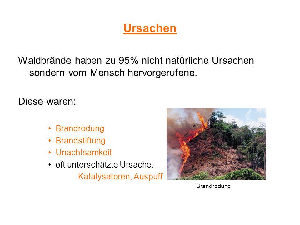 Ursachen Waldbrände haben zu 95% nicht natürliche Ursachen sondern vom Mensch hervorgerufene. Diese wären: Brandrodung Brandstiftung Unachtsamkeit oft