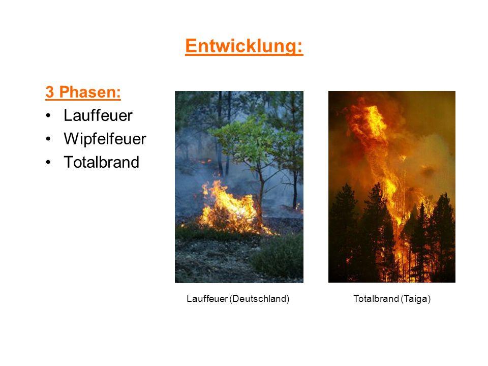 Waldbrandbekämpfung effektivste Methode: Lösch -flugzeuge,-hubschrauber aber auch äußert riskant (3 Tote bei Löschflugzeugabsturz 2002) spez.