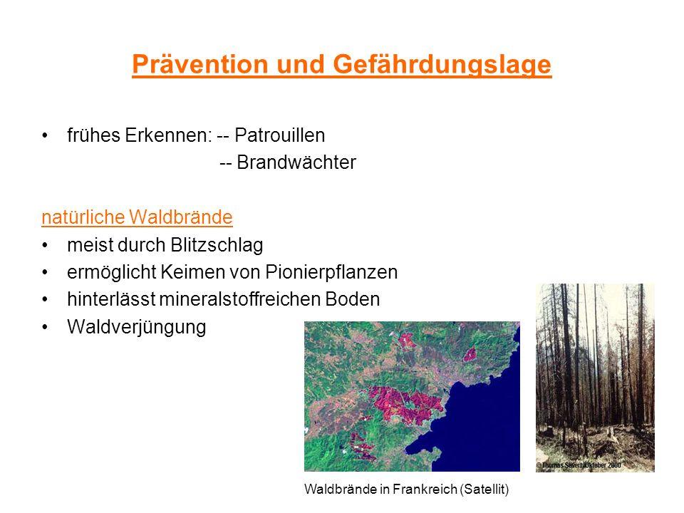 Prävention und Gefährdungslage frühes Erkennen: -- Patrouillen -- Brandwächter natürliche Waldbrände meist durch Blitzschlag ermöglicht Keimen von Pio