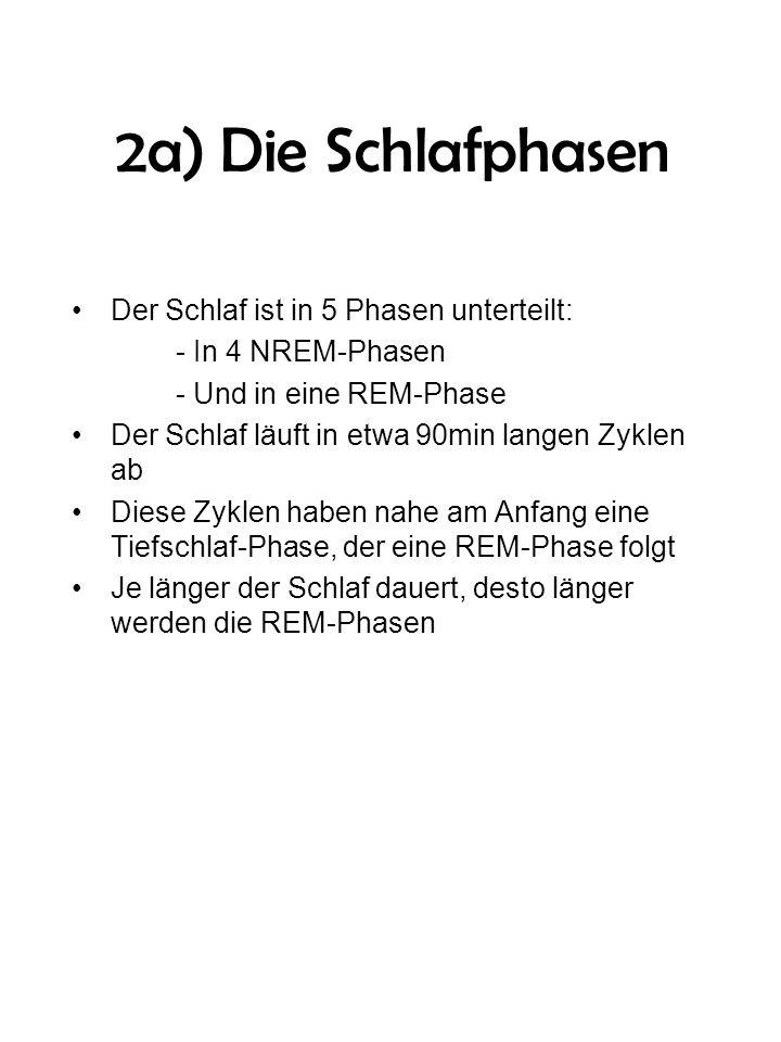 2a) Die Schlafphasen Der Schlaf ist in 5 Phasen unterteilt: - In 4 NREM-Phasen - Und in eine REM-Phase Der Schlaf läuft in etwa 90min langen Zyklen ab