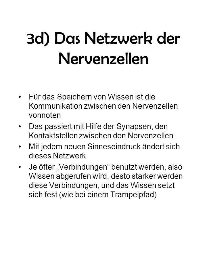 3d) Das Netzwerk der Nervenzellen Für das Speichern von Wissen ist die Kommunikation zwischen den Nervenzellen vonnöten Das passiert mit Hilfe der Syn