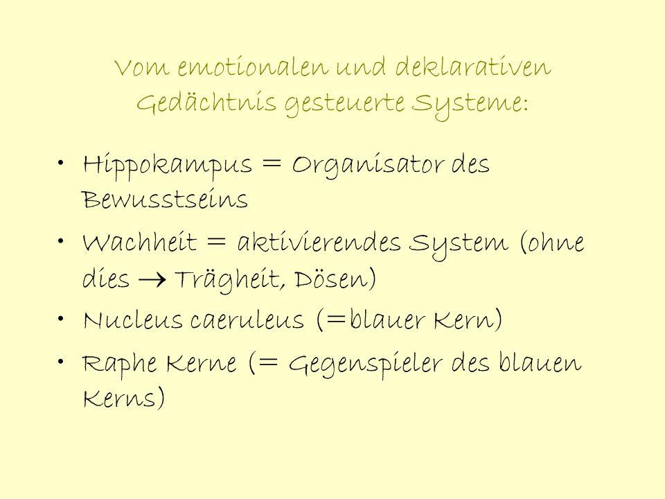 Vom emotionalen und deklarativen Gedächtnis gesteuerte Systeme: Hippokampus = Organisator des Bewusstseins Wachheit = aktivierendes System (ohne dies