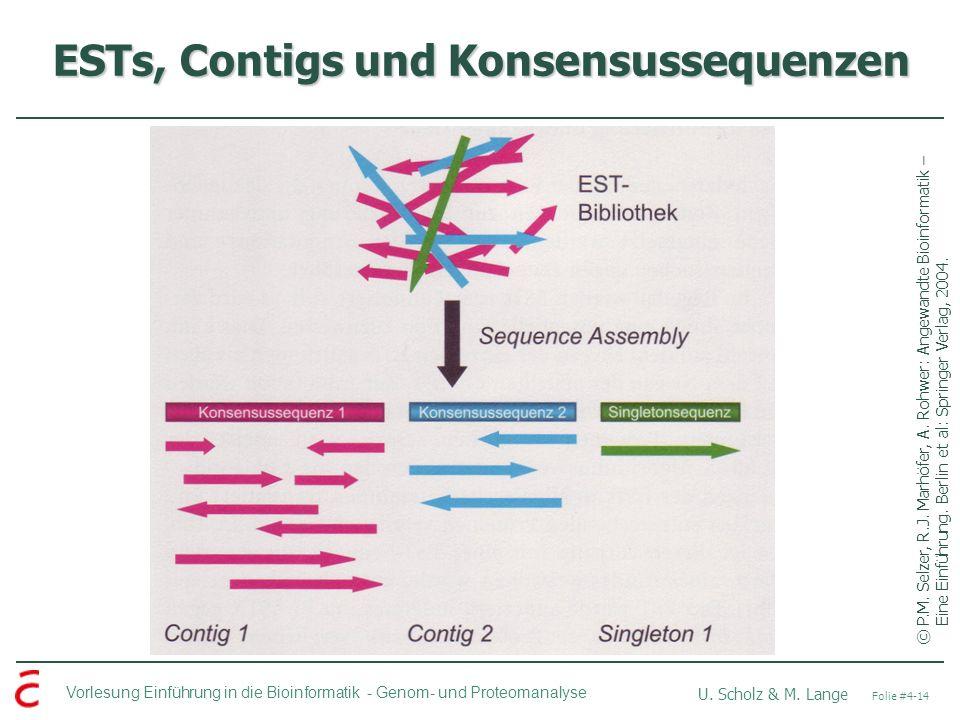 Vorlesung Einführung in die Bioinformatik - U. Scholz & M. Lange Folie #4-14 Genom- und Proteomanalyse ESTs, Contigs und Konsensussequenzen ©P.M. Selz