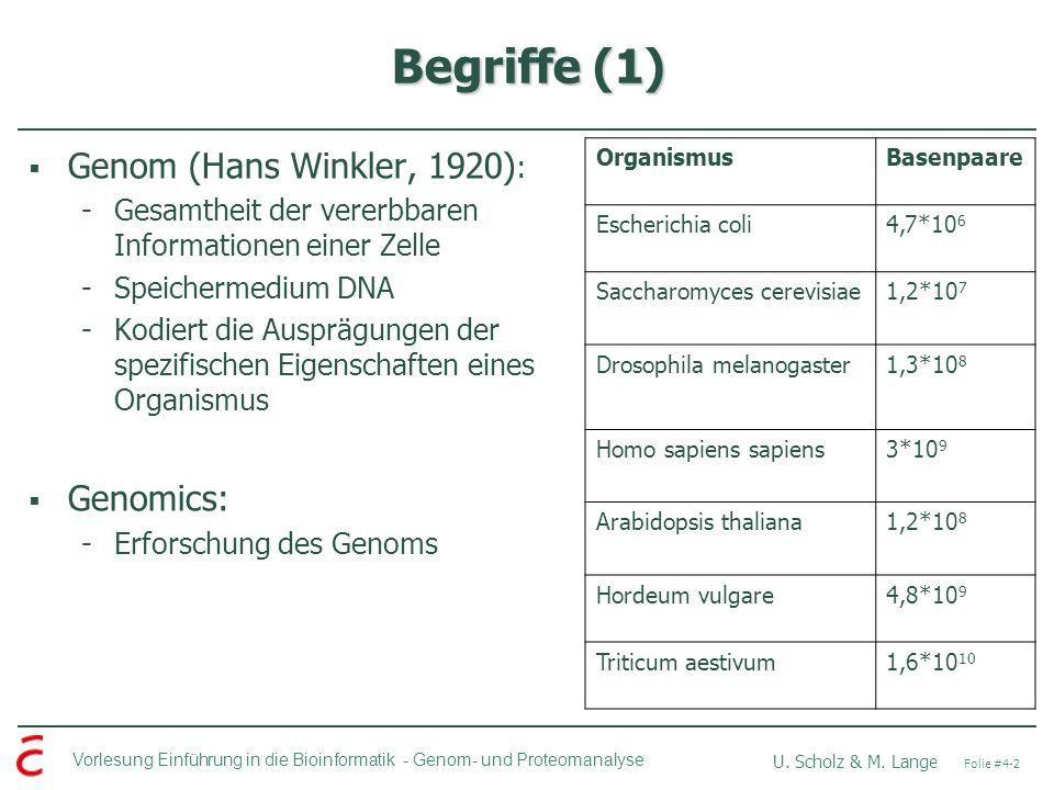 Vorlesung Einführung in die Bioinformatik - U. Scholz & M. Lange Folie #4-2 Genom- und Proteomanalyse Begriffe (1) Genom (Hans Winkler, 1920) : -Gesam