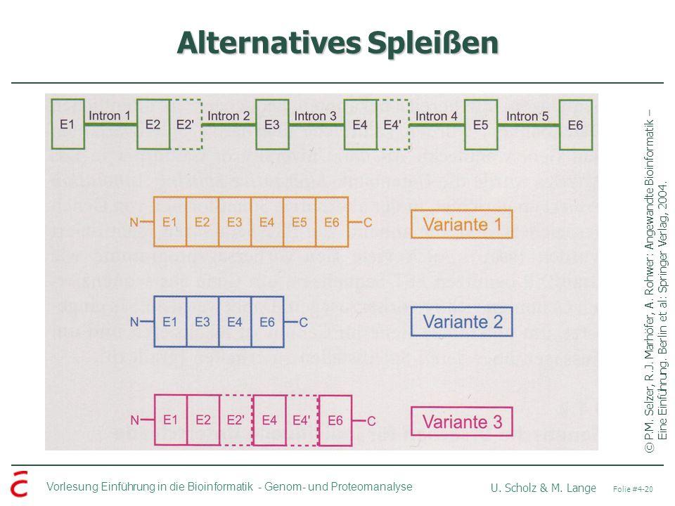 Vorlesung Einführung in die Bioinformatik - U. Scholz & M. Lange Folie #4-20 Genom- und Proteomanalyse Alternatives Spleißen ©P.M. Selzer, R.J. Marhöf