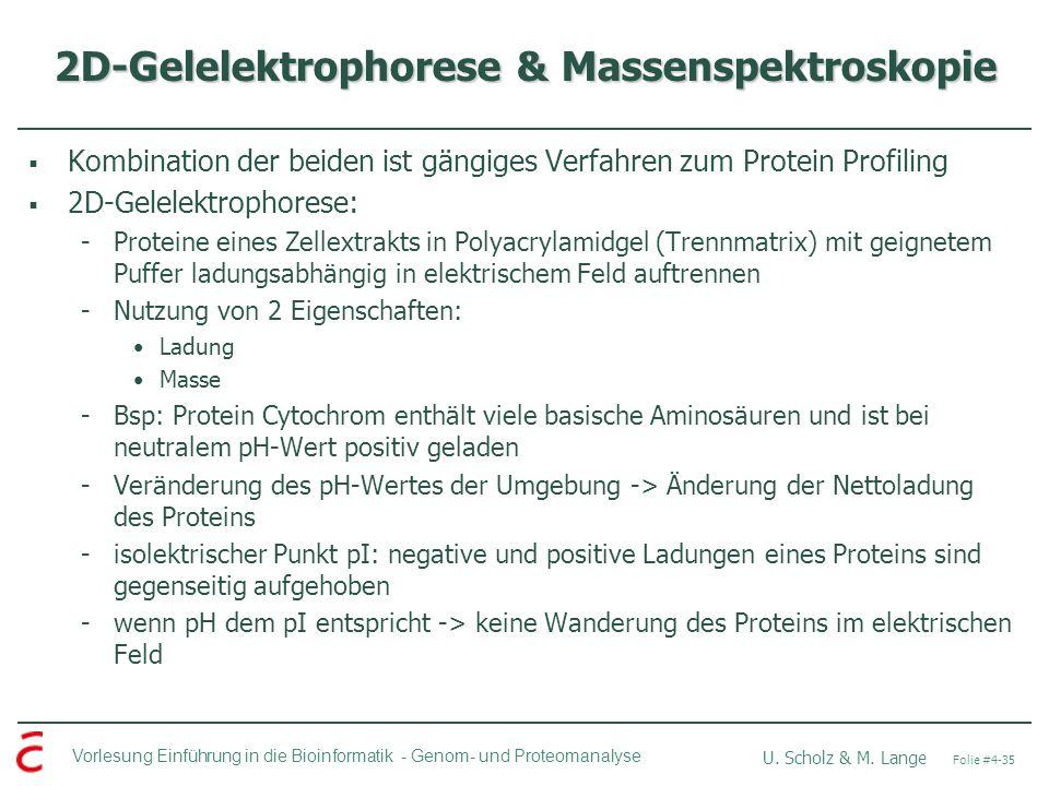 Vorlesung Einführung in die Bioinformatik - U. Scholz & M. Lange Folie #4-35 Genom- und Proteomanalyse 2D-Gelelektrophorese & Massenspektroskopie Komb