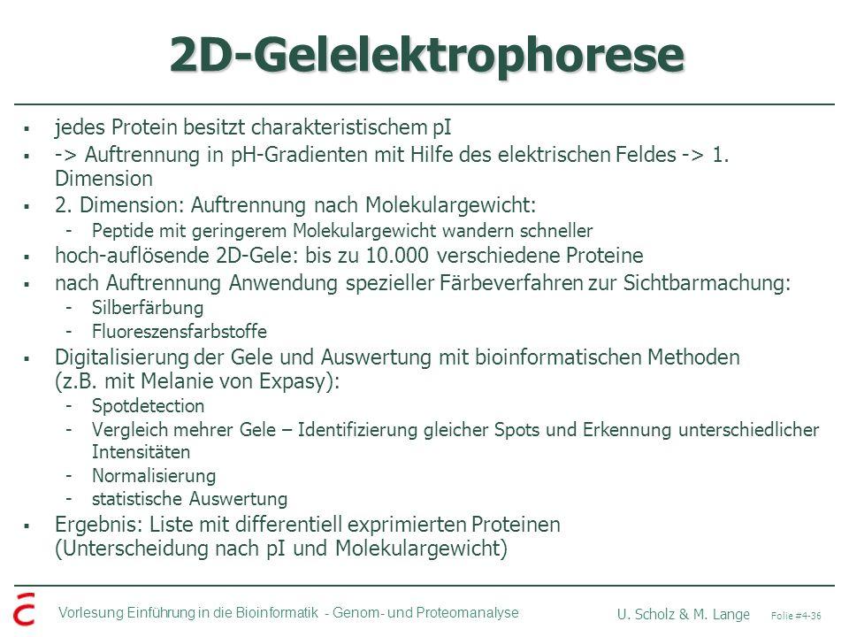 Vorlesung Einführung in die Bioinformatik - U. Scholz & M. Lange Folie #4-36 Genom- und Proteomanalyse 2D-Gelelektrophorese jedes Protein besitzt char