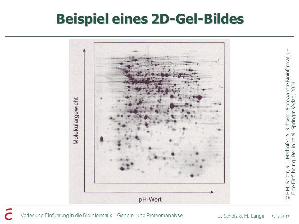 Vorlesung Einführung in die Bioinformatik - U. Scholz & M. Lange Folie #4-37 Genom- und Proteomanalyse Beispiel eines 2D-Gel-Bildes ©P.M. Selzer, R.J.