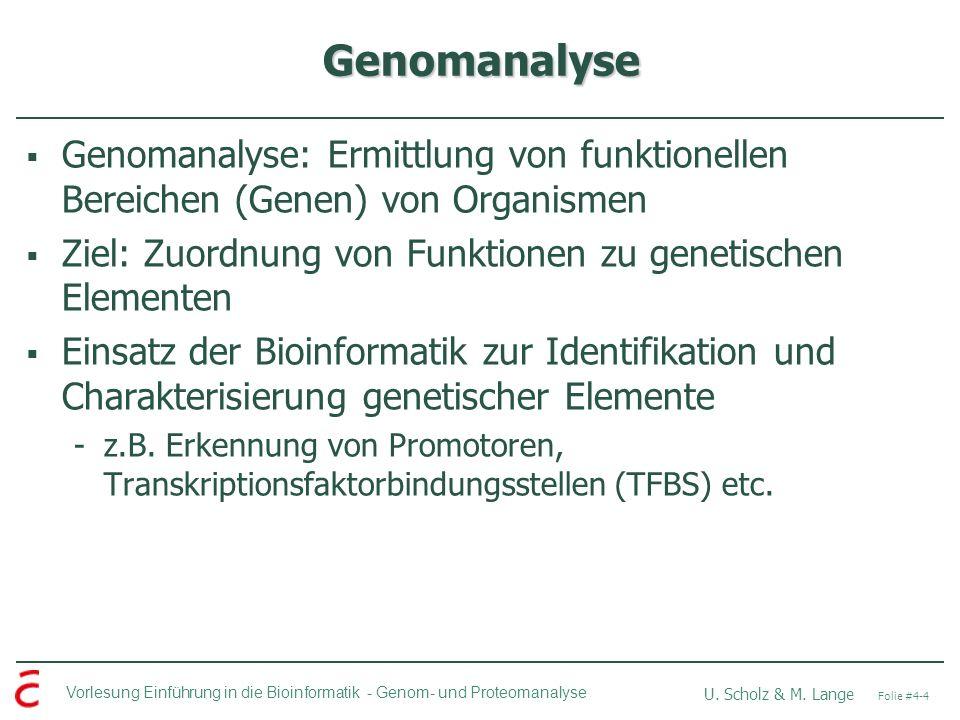 Vorlesung Einführung in die Bioinformatik - U. Scholz & M. Lange Folie #4-4 Genom- und Proteomanalyse Genomanalyse Genomanalyse: Ermittlung von funkti