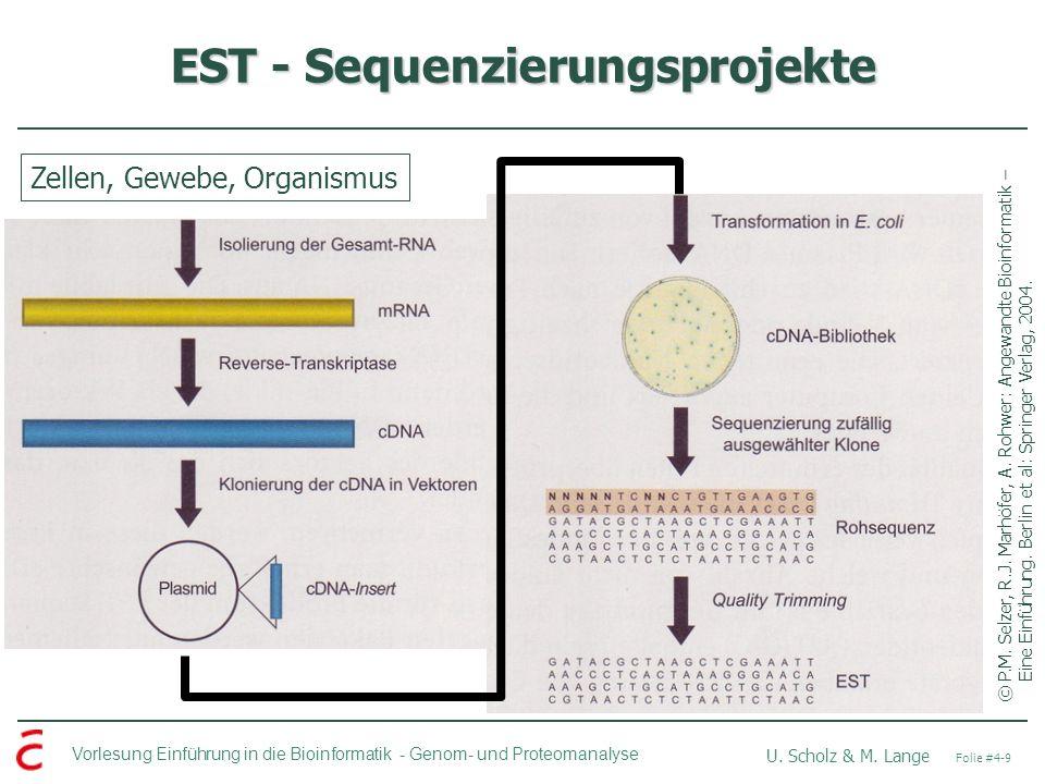 Vorlesung Einführung in die Bioinformatik - U. Scholz & M. Lange Folie #4-9 Genom- und Proteomanalyse EST - Sequenzierungsprojekte ©P.M. Selzer, R.J.