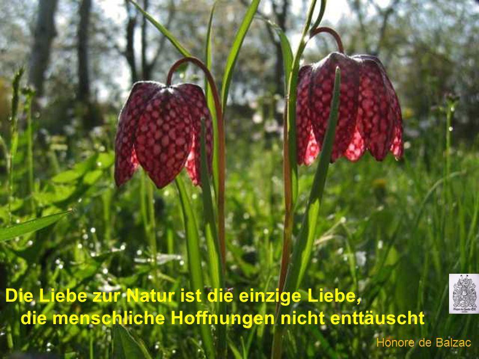 Die Liebe zur Natur ist die einzige Liebe, die menschliche Hoffnungen nicht enttäuscht Honore de Balzac