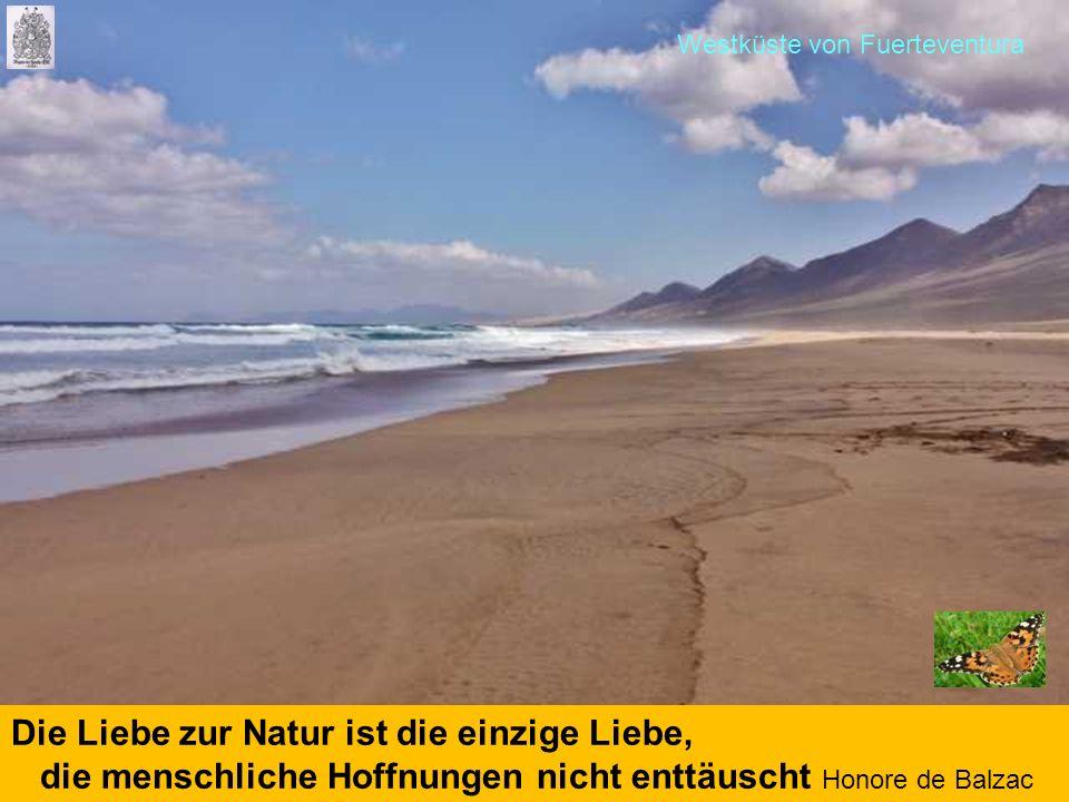 Die Liebe zur Natur ist die einzige Liebe, die menschliche Hoffnungen nicht enttäuscht Honore de Balzac Westküste von Fuerteventura
