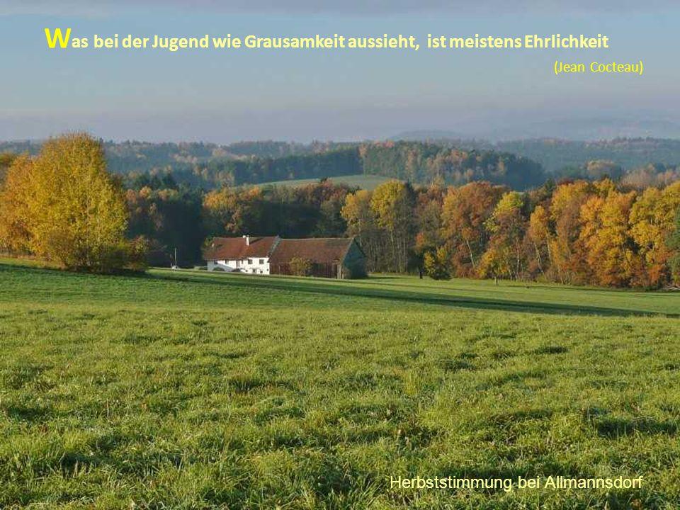 W as bei der Jugend wie Grausamkeit aussieht, ist meistens Ehrlichkeit (Jean Cocteau) Herbststimmung bei Allmannsdorf