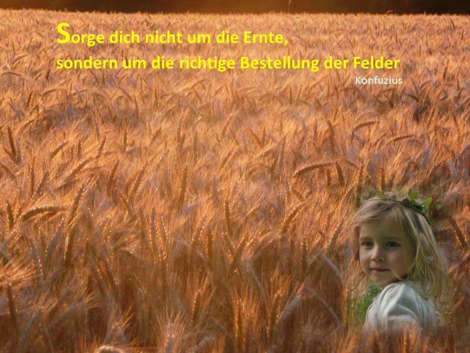 S orge dich nicht um die Ernte, sondern um die richtige Bestellung der Felder Konfuzius
