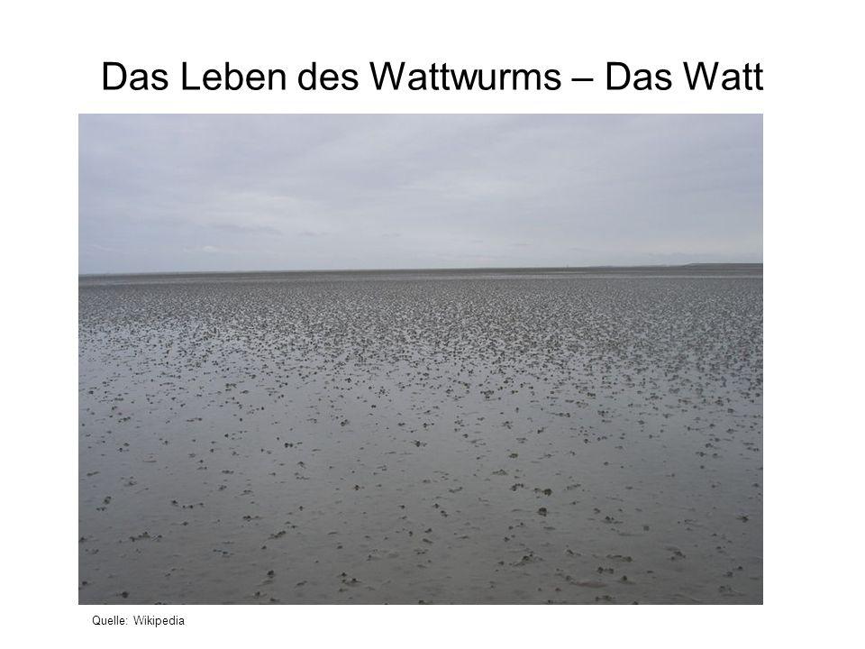 Das Leben des Wattwurms – Das Watt Quelle: Wikipedia