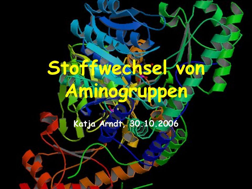Stoffwechsel von Aminogruppen Katja Arndt, 30.10.2006