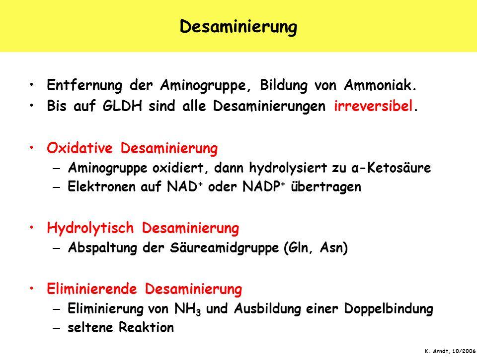 K. Arndt, 10/2006 Desaminierung Entfernung der Aminogruppe, Bildung von Ammoniak. Bis auf GLDH sind alle Desaminierungen irreversibel. Oxidative Desam