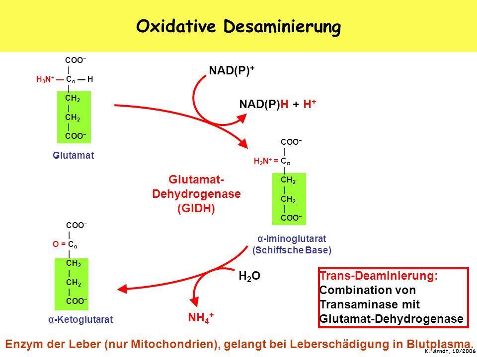K. Arndt, 10/2006 Oxidative Desaminierung COO   O = C α   CH 2   CH 2   COO   H 3 N + C α H   CH 2   CH 2   COO α-Ketoglutarat α-Iminoglutarat (Schiff