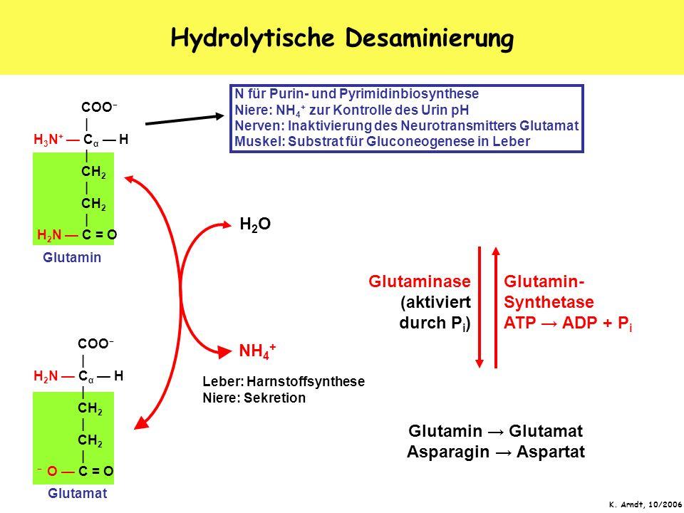 K. Arndt, 10/2006 Hydrolytische Desaminierung COO   H 2 N C α H   CH 2   CH 2   O C = O COO   H 3 N + C α H   CH 2   CH 2   H 2 N C = O Glutamat Gluta