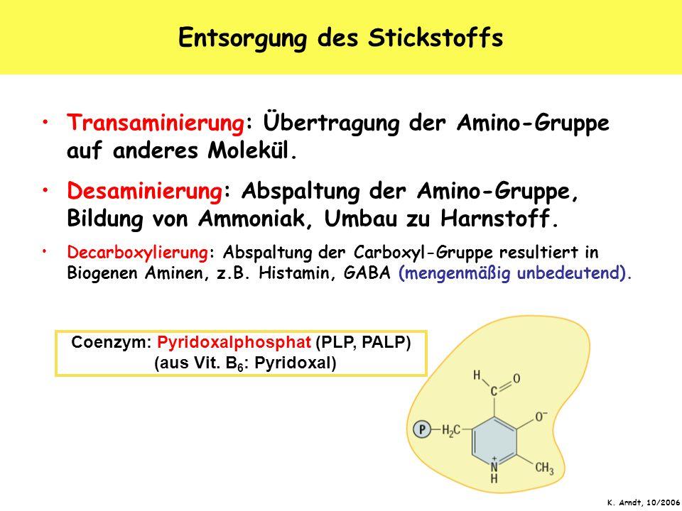 K. Arndt, 10/2006 Entsorgung des Stickstoffs Transaminierung: Übertragung der Amino-Gruppe auf anderes Molekül. Desaminierung: Abspaltung der Amino-Gr