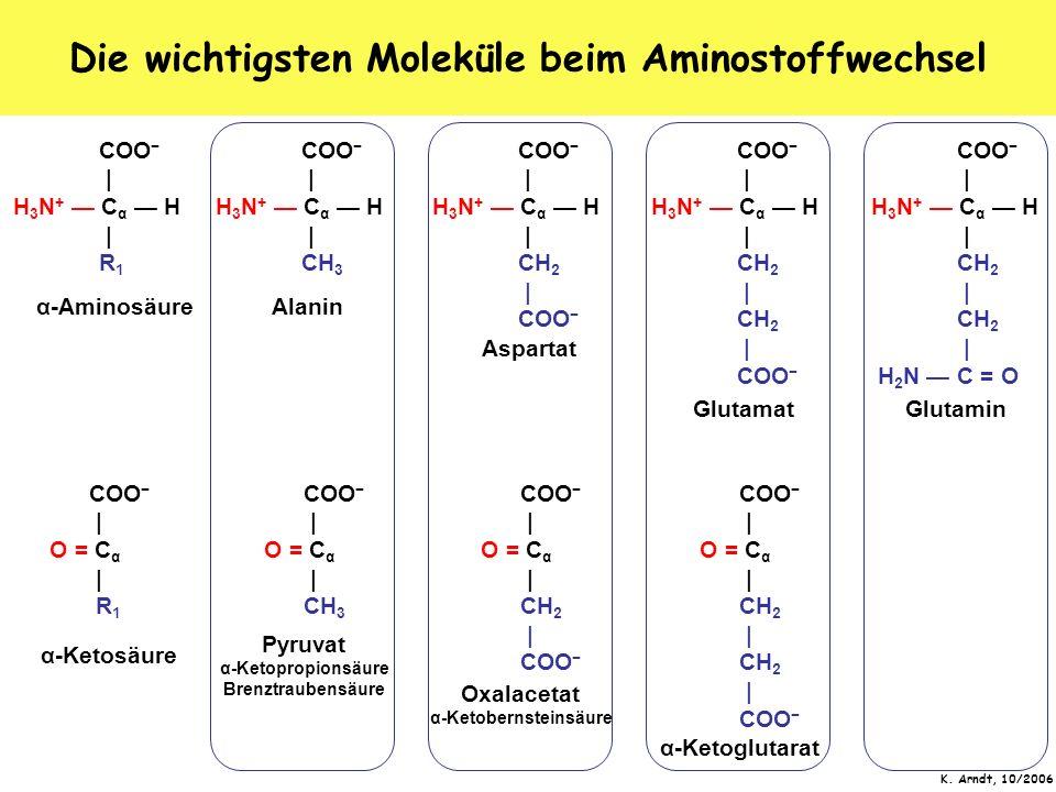 K. Arndt, 10/2006 Die wichtigsten Moleküle beim Aminostoffwechsel COO   H 3 N + C α H   R 1 COO   O = C α   R 1 α-Aminosäure α-Ketosäure COO   H 3 N +