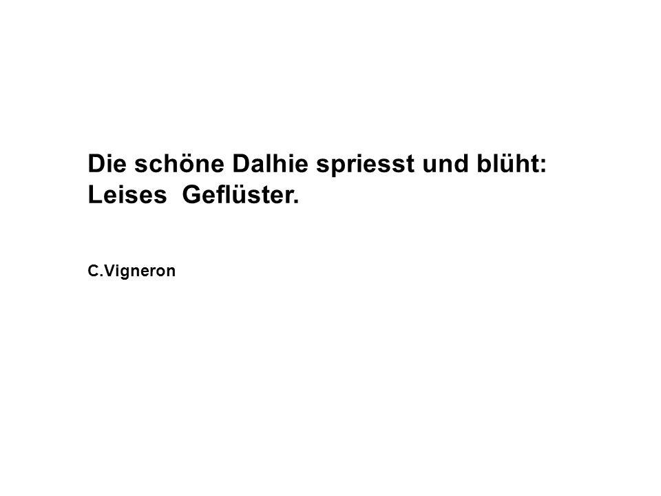 Die schöne Dalhie spriesst und blüht: Leises Geflüster. C.Vigneron
